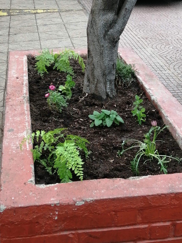 Nuevas Plantitas